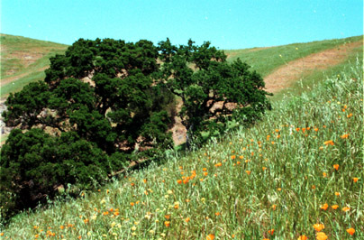 off Cull Canyon, circa 1986