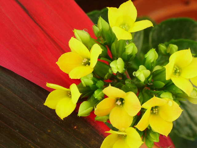 Finding Some Little Yellow Flowers Photos