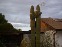 Cactus and TV Antenna. click photo for larger image